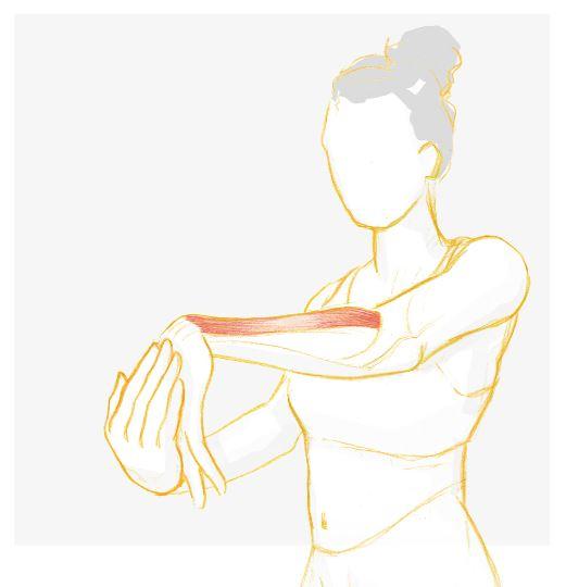 6 etirement des bras